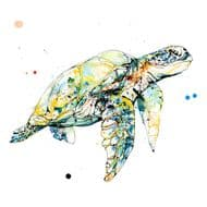 Kathryn Callaghan   Tranquil Turtle Print