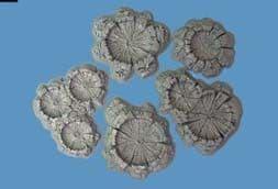 Pegasus Hobbies 28mm Unpainted Shell/Bomb Craters # 5214