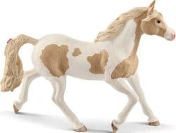 Paint horse mare