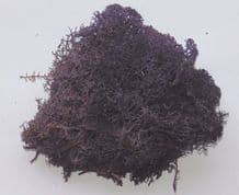 Foliage Lichen Moss for Model Trees Bushes Hedges Aubergine 50g bag