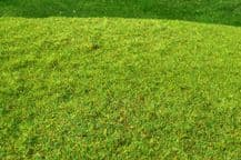 Model Scene F001 Grass Mat Cut Meadow Spring