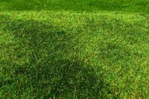 Model Scene F002 Grass Mat Cut Meadow Early Summer