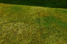 Model Scene F003 Grass Mat Cut Meadow Late Summer
